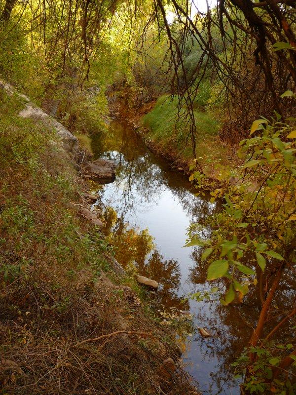 Fall Color - Queen Creek Riparian Area