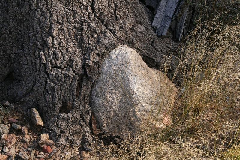 Oak Tree and Large Stone