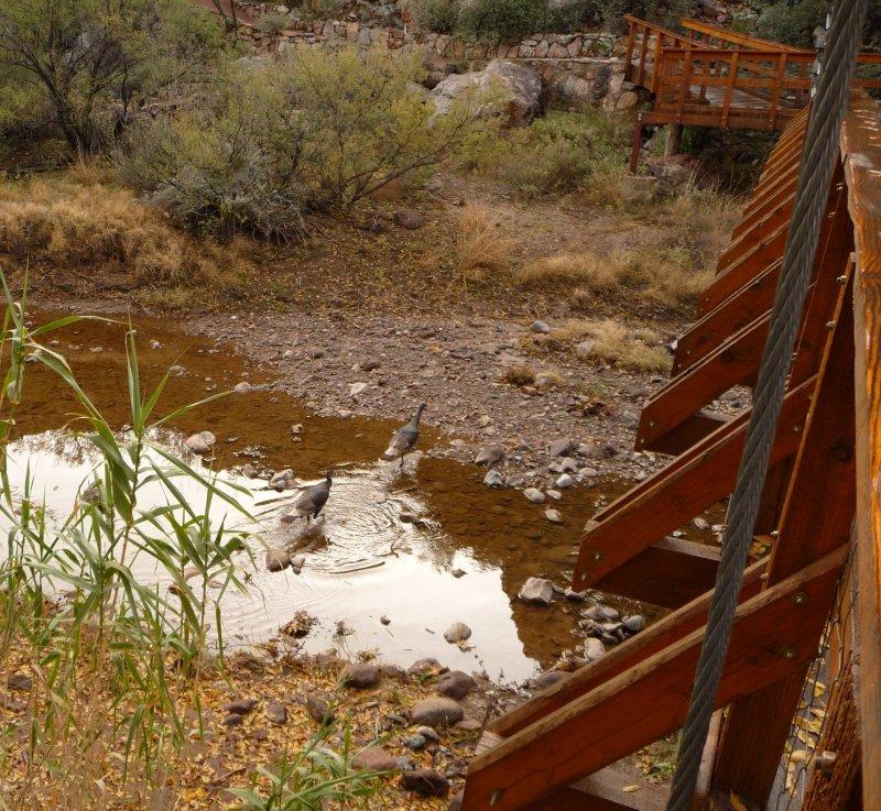Wading Across Queen Creek