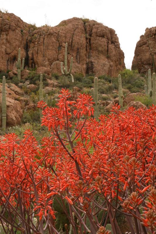 Aloe maculata against Magma Ridge