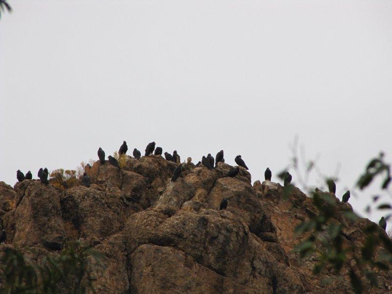 Turkey Vultures on Magma Ridge