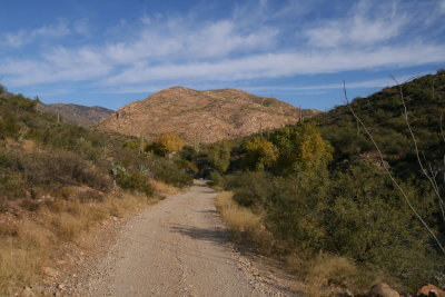Autumn Color in Whitford Canyon