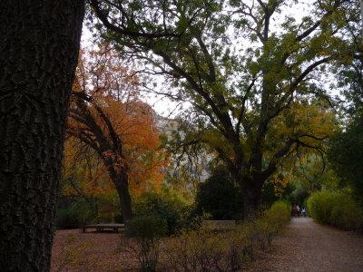 Autumn at Boyce Thompson Arboretum