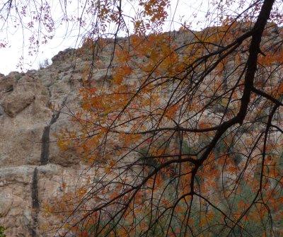 Autumn Colors and a black streak of Desert Varnish