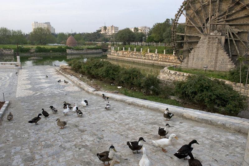 Hama april 2009 8360.jpg