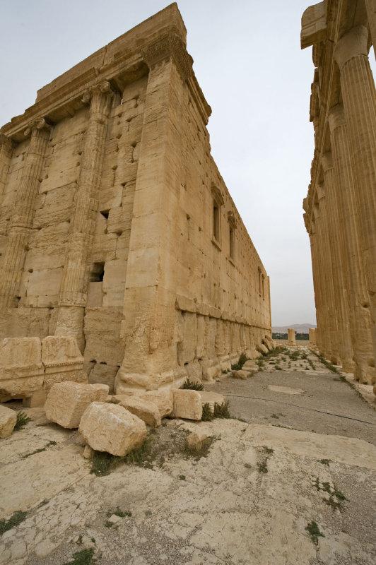 Palmyra apr 2009 0234.jpg