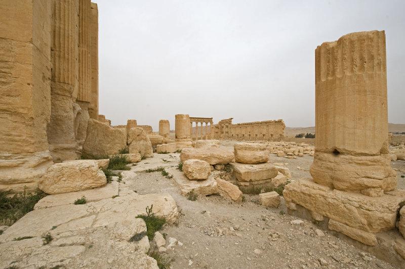 Palmyra apr 2009 0238.jpg