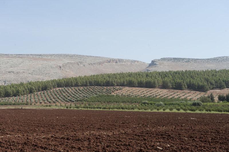 Ain Dara 2010 0494.jpg
