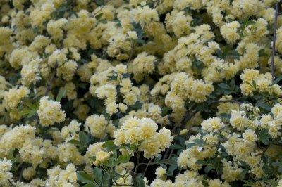 Hama april 2009 8353.jpg