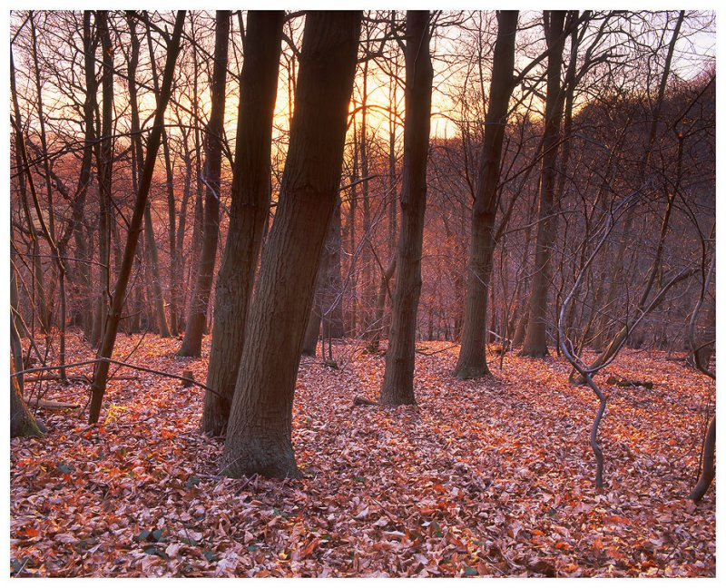 Winter Sunset in the Chantry Wood, Guildford (2)