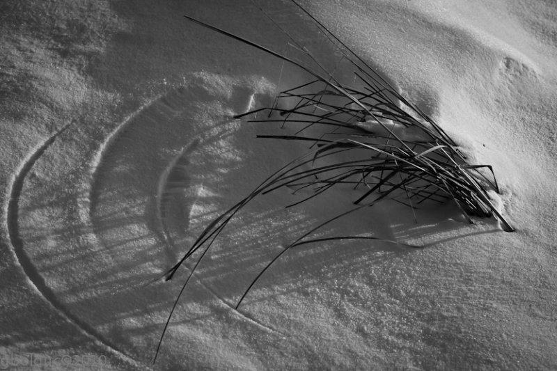 Cercles sur la neige_compas dherbe