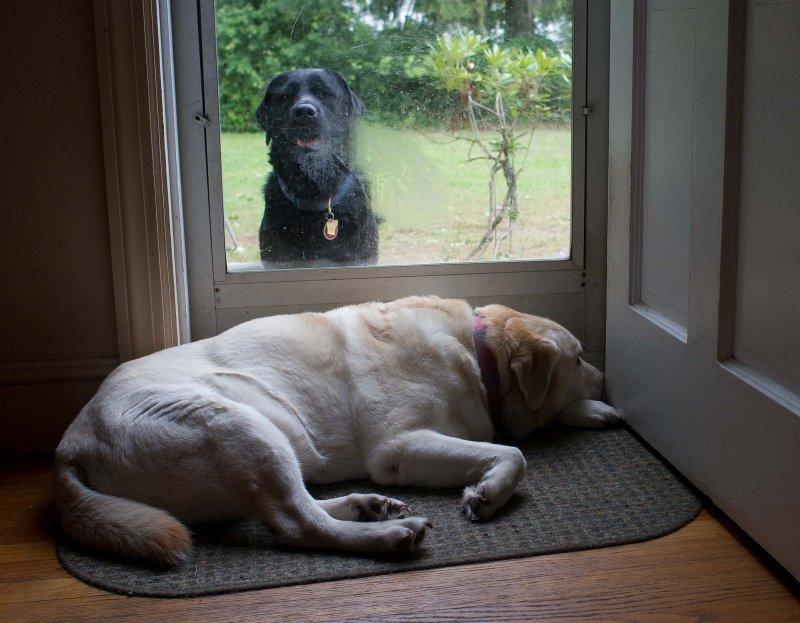 pbase Do we let him in? October 3 2010 1 of 1.jpg