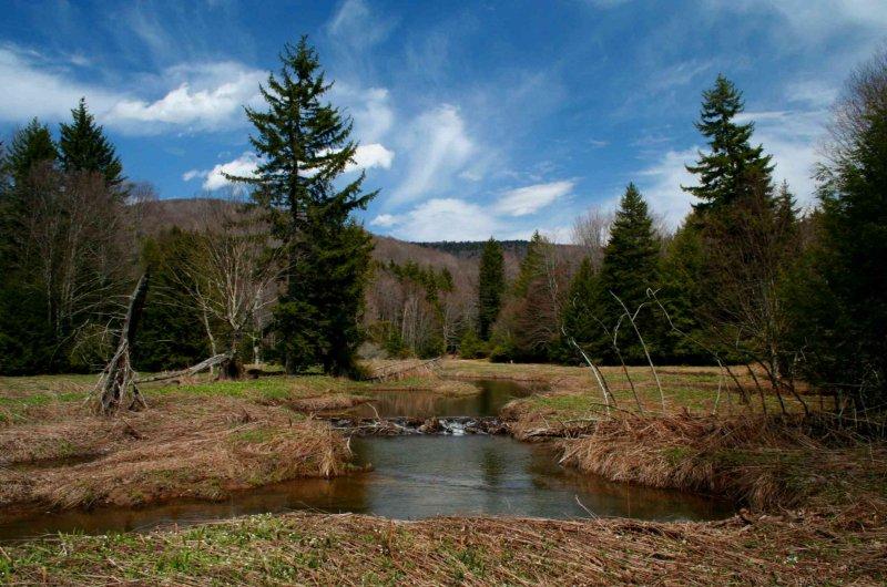 Beaver Dam Upper Hills Creek Spring Hues tb0409flr.jpg