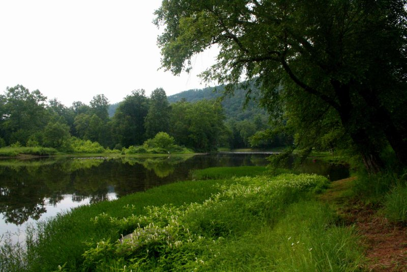 Greenbrier River Reflection Trees Leaning Out tb0810qwr.jpg