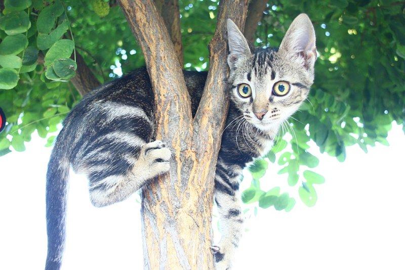 Psyco kitten I should use automatic settings.jpg