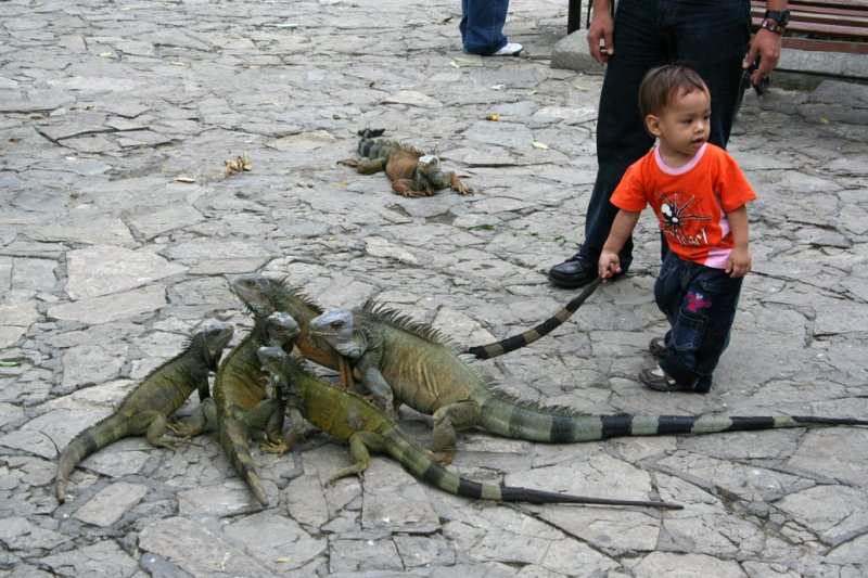 This little boy was hanging onto the tail of one of his new friends!