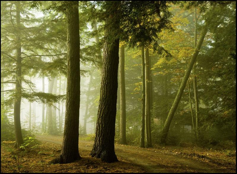 Olde Woodes Road