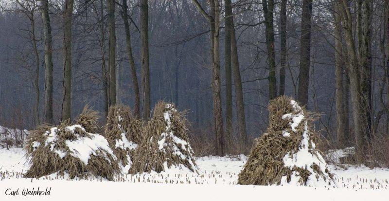Corn Shocks, Lancaster County
