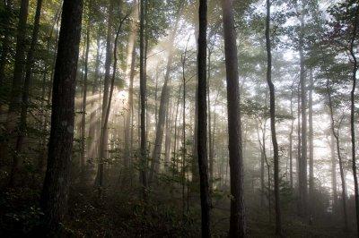 Barbour fog 3