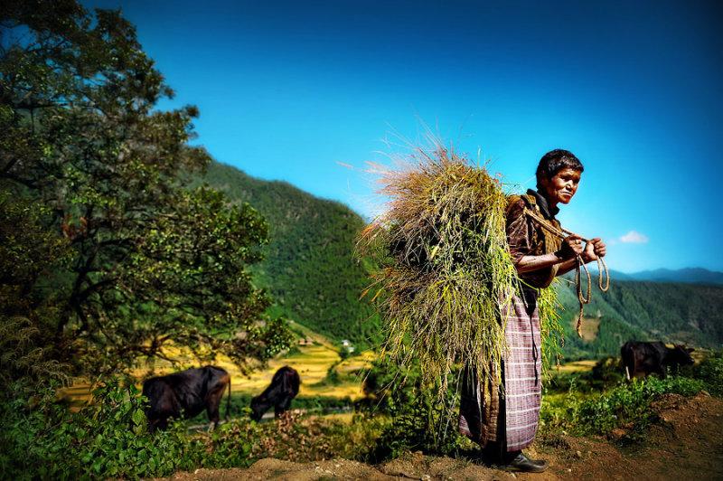 hay lady 1