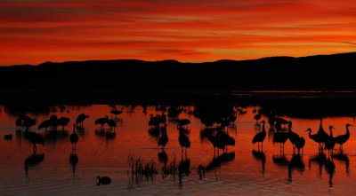 Red Dawn at the Bosque