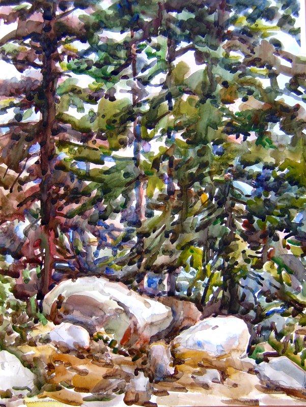 Hilltop pines - Tahoe 2008.08 (S5300538_A)