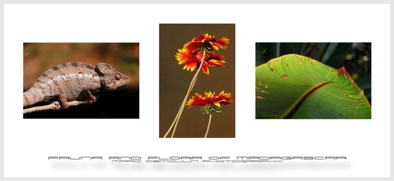 Fauna and flora of Madagascar