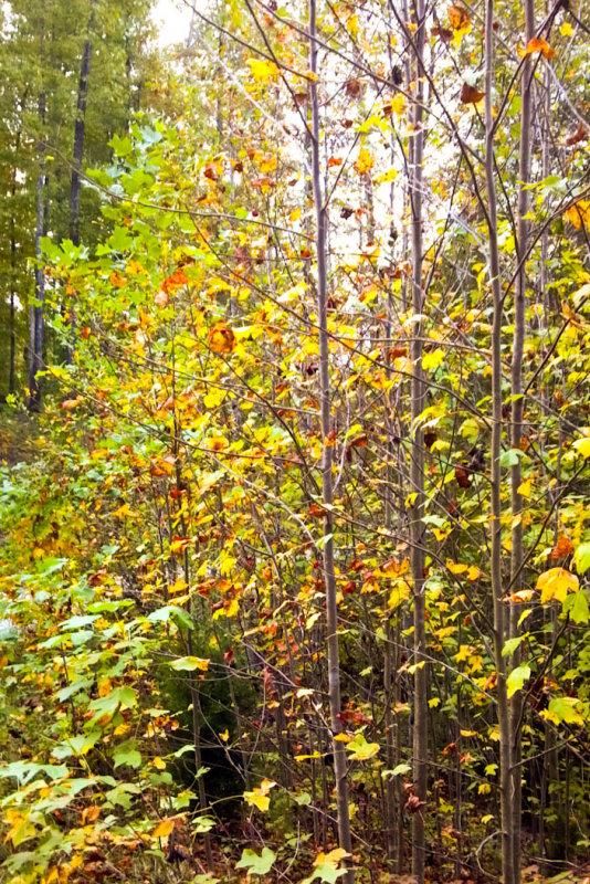 2012-10-05_18-39-23_434.jpg