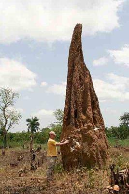 Termite hill in Togo.