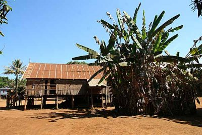 Kreung community house with sacred banana plant in Kameng, Cambodia.