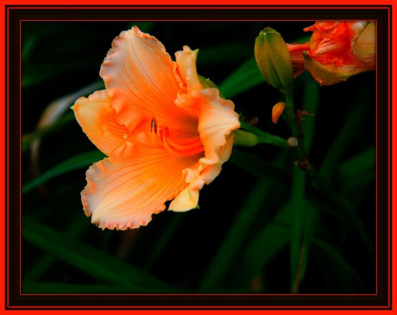 flora 9