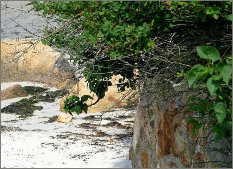 Beach Rocks and Greenery