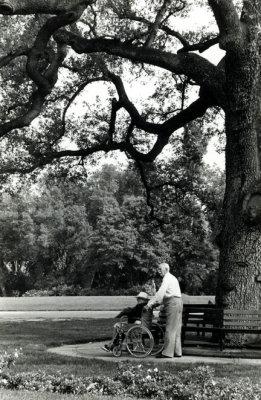 Old Oaks Pasadena, CA 1983