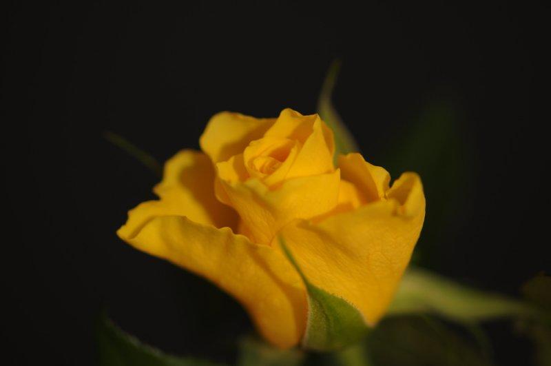 D30_3550-900.jpg