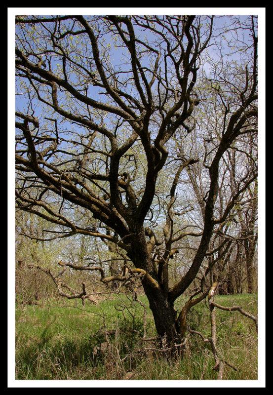 Loco Tree