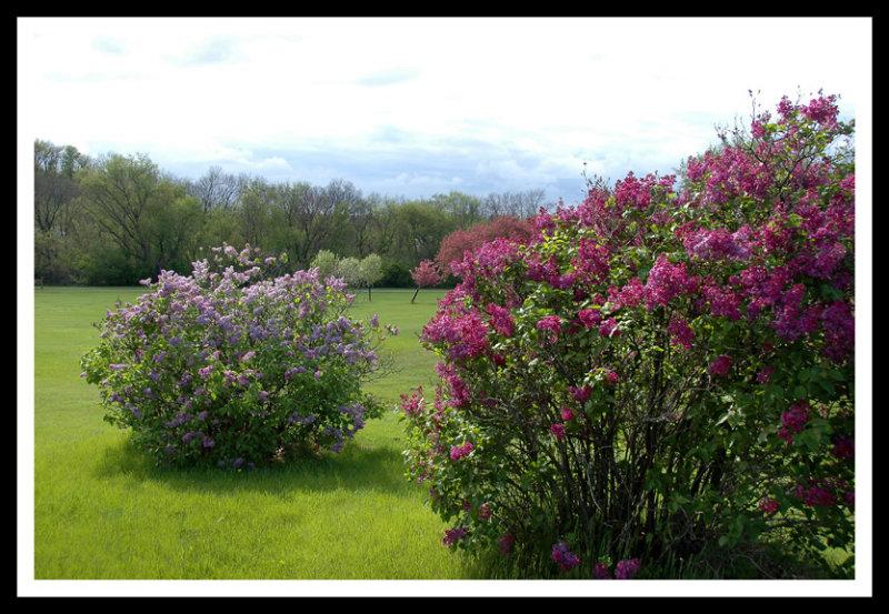 Spring Rite of Passage
