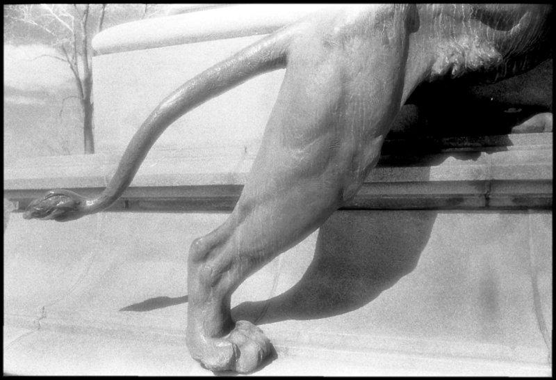 Leos leg