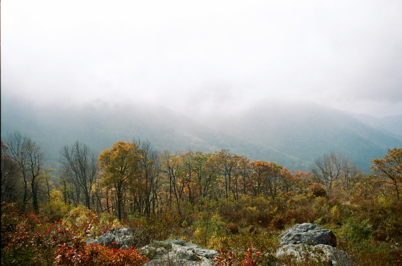 Foggy Afternoon, Shenandoah National Park, VA
