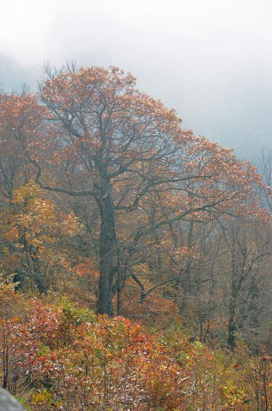 Overlook, Shenandoah National Park