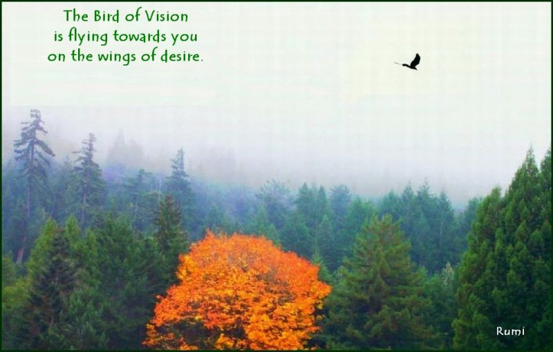 Bird of Vision