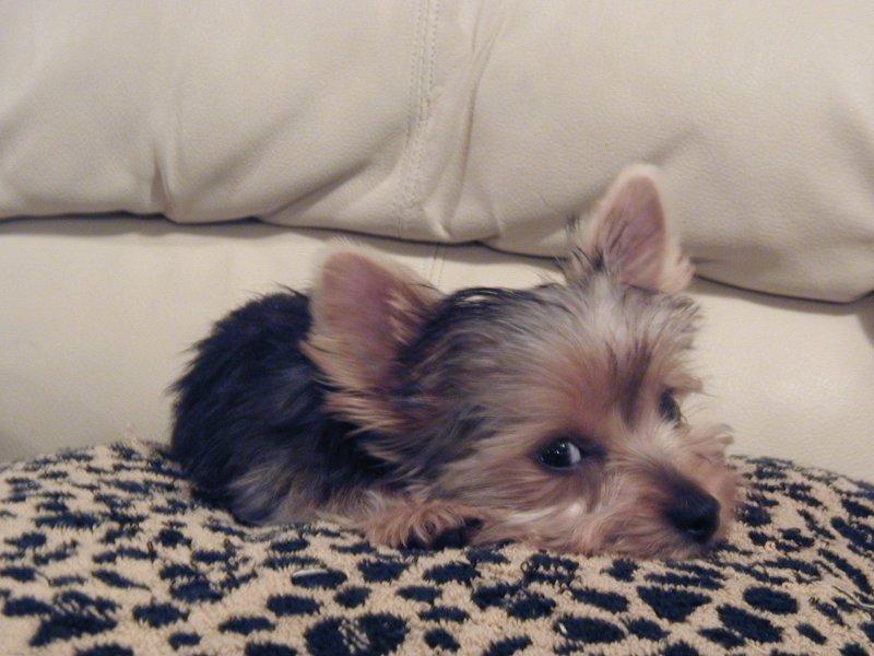 Zoe relaxing