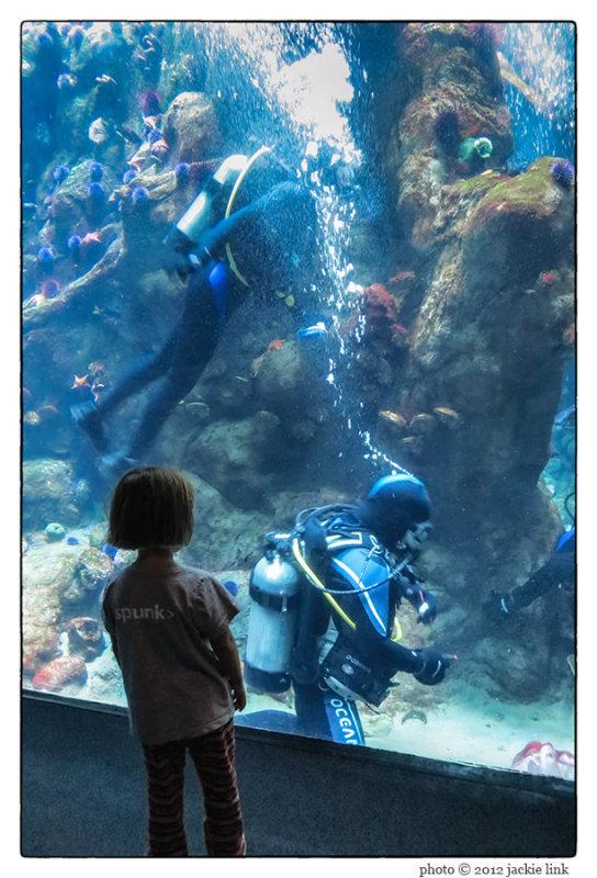 Steinhart Aquarium-child & divers.jpg