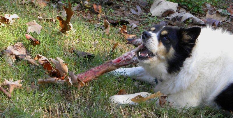 Gnawing a Hoof