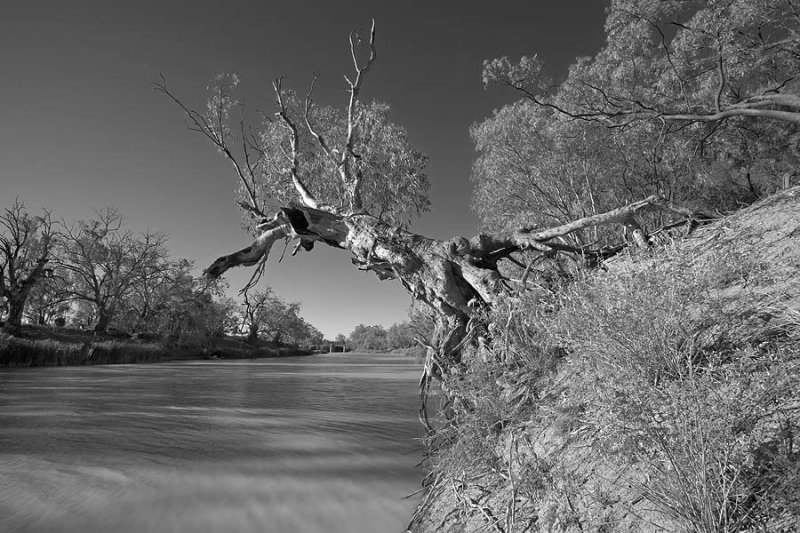 Darling River Gum