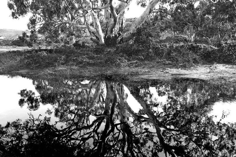 Mannum Falls Reflections
