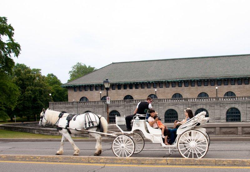 taking the horse tour