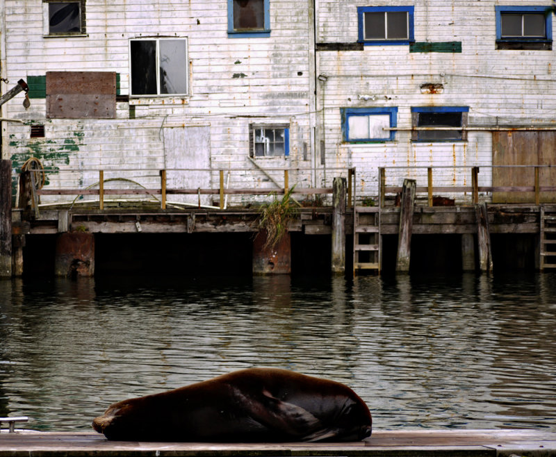Evening visitor, Fort Bragg, California, 2009
