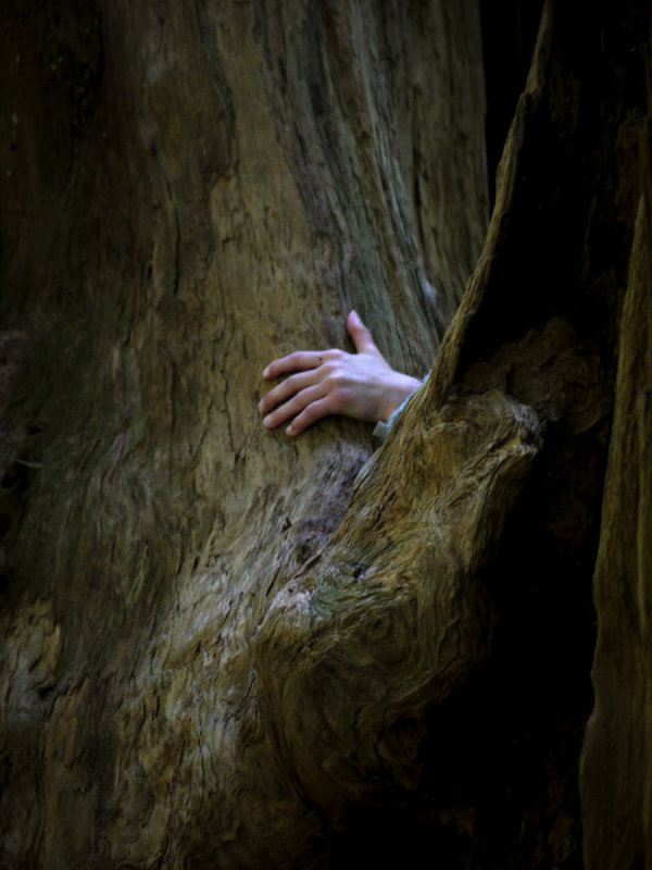 A child's touch, Jedediah Smith Redwoods State Park, California, 2009