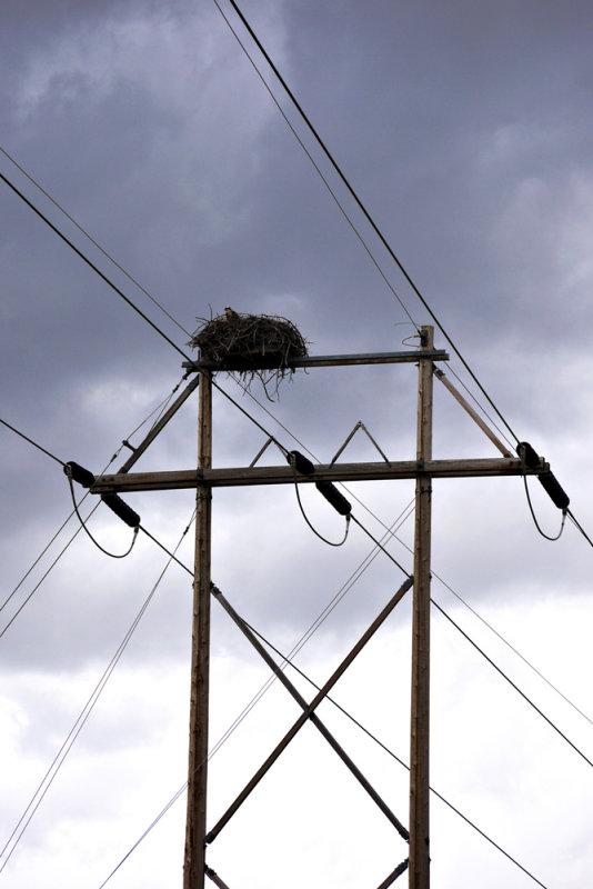 Osprey nest, Palisades Reservoir, Idaho, 2010