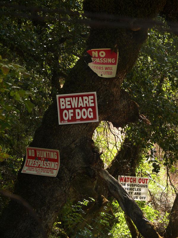 Territorial imperative, Cosumnes River, California, 2008